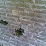 Mura2